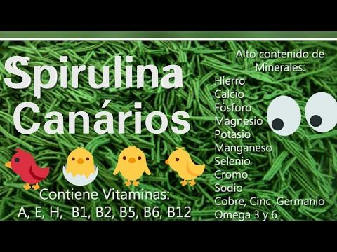SPIRULINA NOS CANÁRIOS TOP!!!!