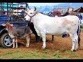 Mercado de Animales #9