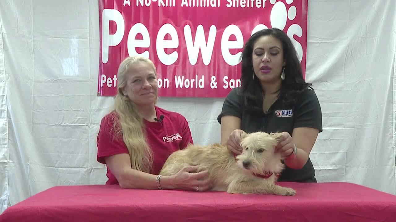 New Orleans Pet Adoption