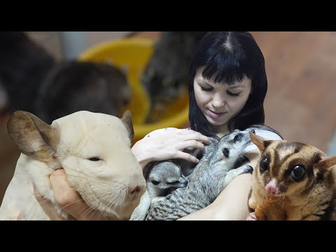 Вопрос: Как Вы относитесь к владельцам диких домашних животных (ежиков, енотов)?