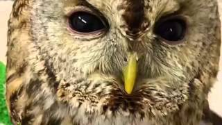 フクロウカフェもふもふ 新宿のCM動画です。