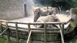 Kampf der Elefanten im Wuppertaler Zoo (25.08.2012)
