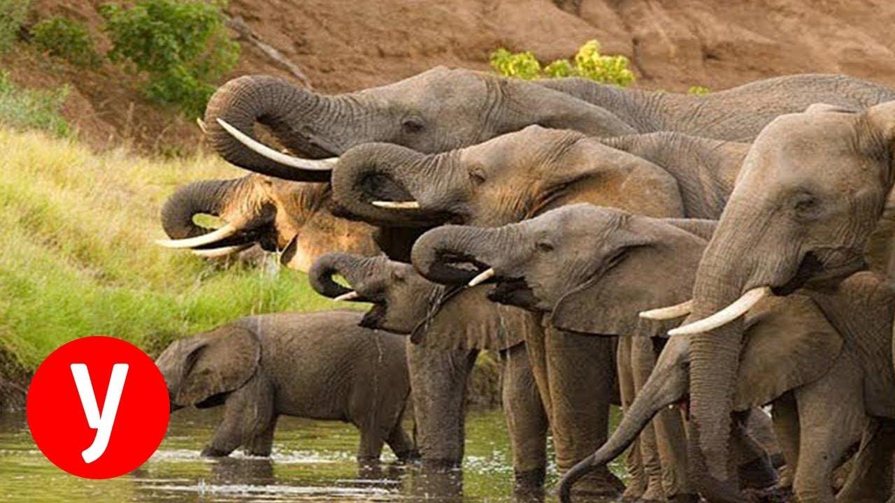 דו קיום: פלפלים חריפים נגד פילים רעבים