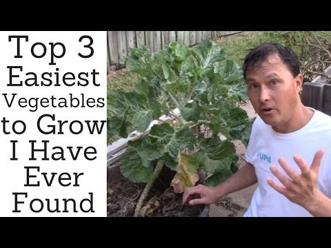 Top 3 Easiest Vegetables to Grow I Have Ever Found