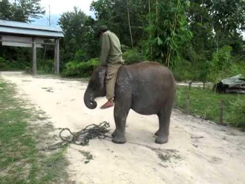 Nadine Chandrawinta mandi dengan gajah