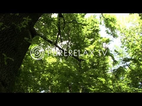 Nature Video - Ambient Sound, Forest, Spirit & Birds - MAGIC FORESTS