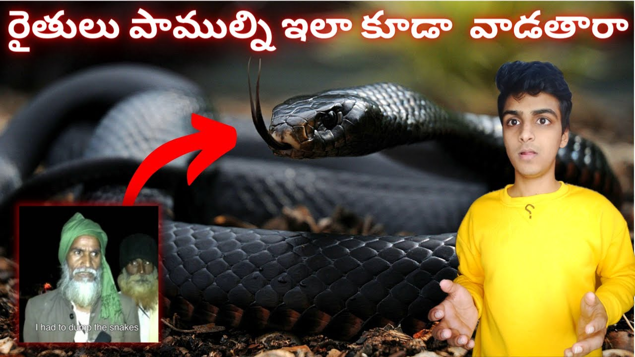 TOP INTERESTING AND AMAZING FACTS IN TELUGU | TOP 10 | Do You Know Ep-82