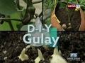 Good News: D-I-Y Gulay
