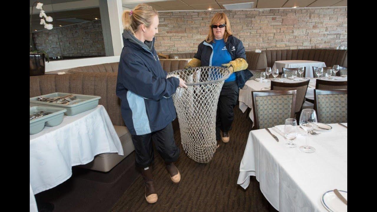 En la mesa 6 hay un le�n marino