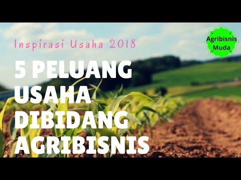 BISNIS ANAK MUDA modal kecil dibidang pertanian - YouTube