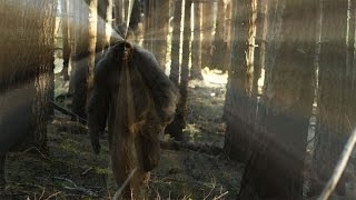SPEAKING OF SASQUATCH - Sasquatch Ontario