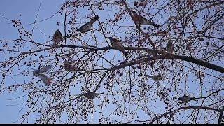 Перелётные птицы Тюменской области