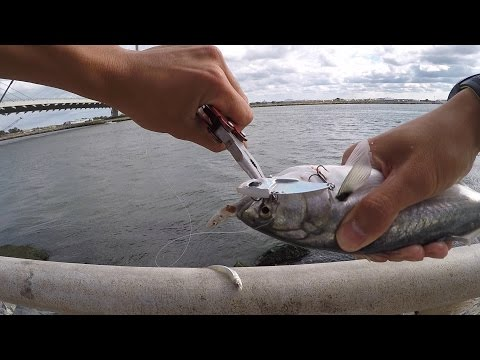2015 surf fishing in delaware what kind of fi for Rehoboth beach fishing