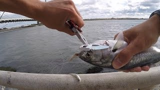 bluefish fishing at the indian river inlet rehoboth beach de