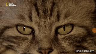 Кошка это Сунна! Кошка в Исламе! Пророк Мухаммад (с.а.с)