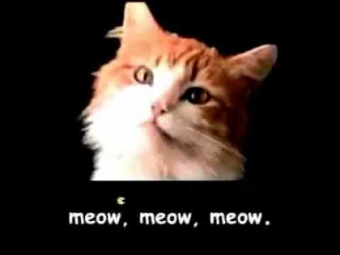Cat Food Commercial Meow Meow Meow Meow