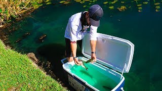 Transporting Fish For Big Bass Survival!! (Pond Rescue)