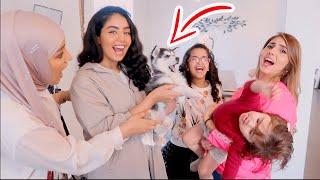 كلب عصابة بدر هجم على ميلا !!
