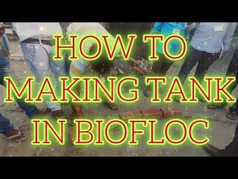biofloc fishfarming fish