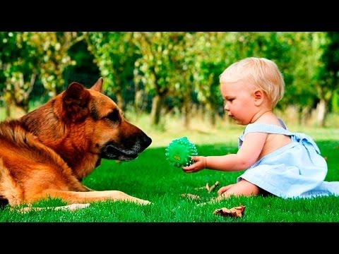 Собаки и дети. Подборка для хорошего настроения видео