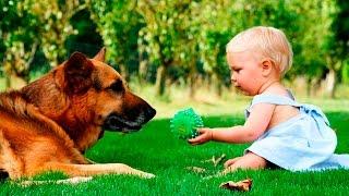 Собаки и дети, лучшие друзья | Часть 2|  Dogs and Baby, the best video