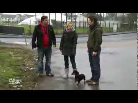 Der Hundeprofi - Martin Rütter - beim Gassigehen mit Dackel Edi