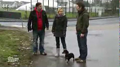 Popular Martin Rütter & Der Hundeprofi videos