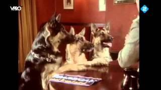Soda Water Dogs