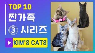 고양이 4명과 함께 해외 이동. 이런 경우 여러분들이라면 어떡하시겠습니까?