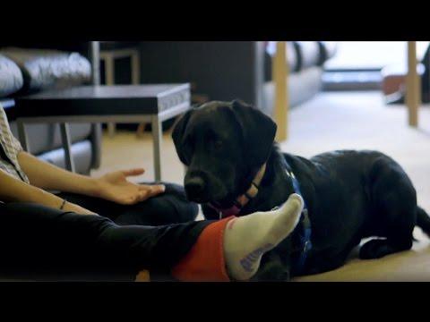 NYCB Dogs!   city.ballet   Bonus Clip