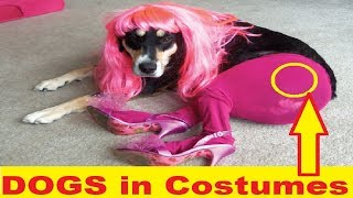 Funny DOGS in Costumes Vines Compilation 😂 Try Not To Laugh Challenge 😝