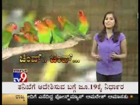 Naidu's Aviary - Exotic birds interview with TV9 Kannada