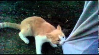 Смешной рыжий кот
