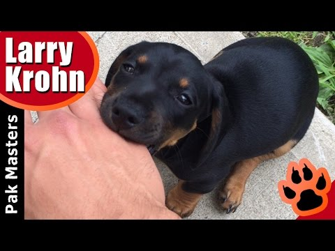 how-to-stop-puppy-biting,-especially-rottweiler-puppies