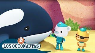 Los Octonautas Oficial en Español - Ayudando A La Orca Gigante thumbnail