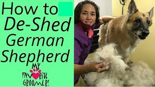 How to Brush and Deshed a German Shepherd