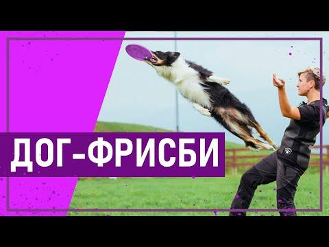 Вот это спорт! # 10 ДОГ-ФРИСБИ