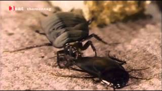 Hausbewohner aber heimlich - Käfer, Milben, Kakerlaken - Teil 1