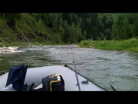 рыбалка в алтае голубой нил чарыш