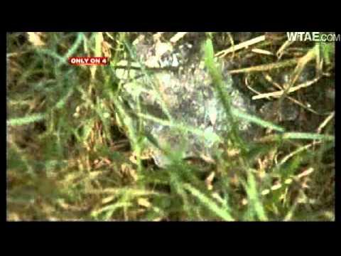 Star Jelly Gooey Substance Slimes House Youtube