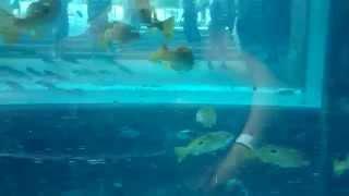 Дубай Аквапарк Aquaventure Dubai  Aquaventure Waterpark часть 8(, 2015-01-24T13:12:43.000Z)