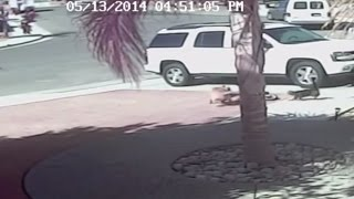 VIDEO: Cat saves Bakersfield boy