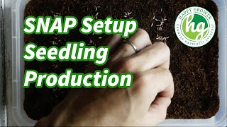 Establishing Seedlings for SNAP Hydroponics: Making Sowing Tray and Sowing Seeds