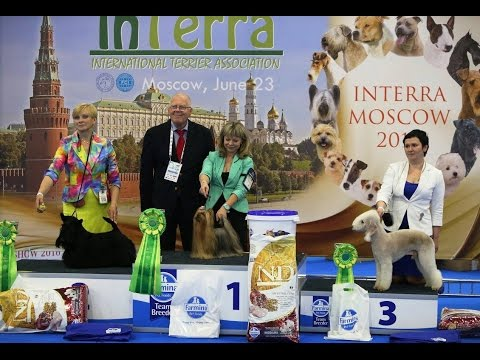 World Dog Show 2016 Moscow, Yorkshire terriers, INTERRA