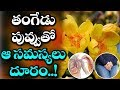 Health Benefits of Tangedu Puvvu | Health Benefits of Flowers | Latest Health Updates | VTube Telugu