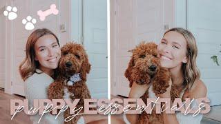 PUPPY ESSENTIALS YOU NEED | new puppy must haves + favorites & 5 month puppy update!
