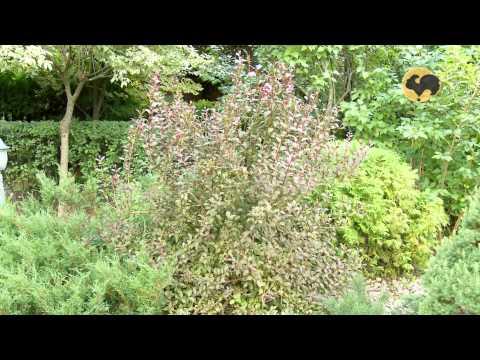 видео: Сад делового человека. Ландшафтные хитрости 90