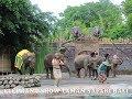elephant show bali safari