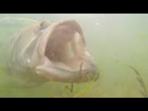 10lb Largemouth Bass Eats GoPro Underwater Slow Motion Strikes Catch and Release
