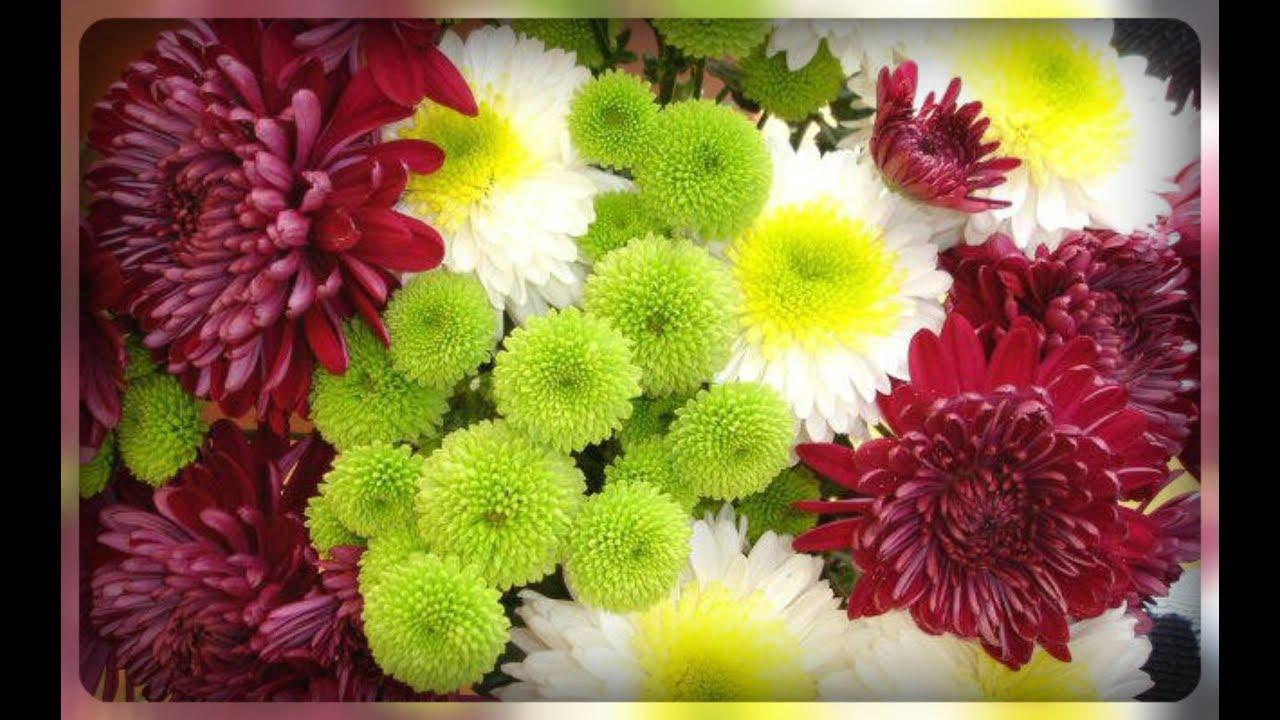 В нашем питомнике можно купить рассаду хризантемы по низким ценам в москве и с доставкой в любой регион.